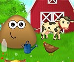 Pou çiftlikte