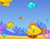 Balık Besleme
